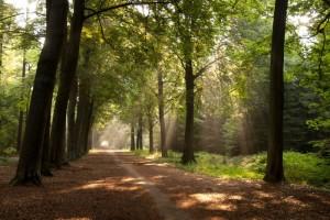 Geniet van de natuur in Brabant